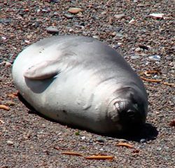 Animal marinho na praia