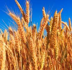 O trigo e o joio - jardinagem simples assim