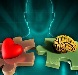 Entre o coração e o cérebro - Provokme